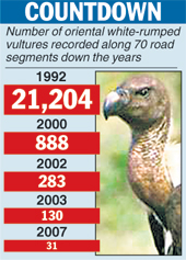 Alarming decrease in number of Vultures recorded : Mythical India
