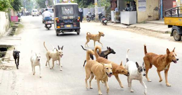 Unprecedented increase in Stray dogs due to Vulture death: Mythical India