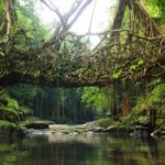 Mythical India root bridges
