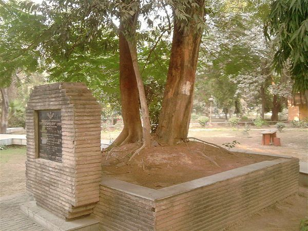 The_tree_at_alfred_park_ where_Chandrashekhar_Azad_shot_himself